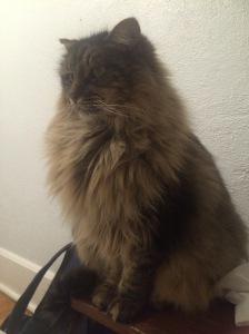 This airbnb cat... ha!!